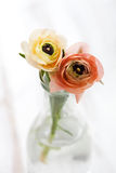 Ranunculus Stock Photography