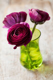 Ranunculus Royalty Free Stock Photos