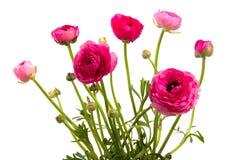 Belles fleurs rouges Photo libre de droits