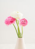 Ranunculus Royalty Free Stock Photography