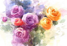 Ranunculus Watercolor Flowers Illustration Hand Painted Stock Photography