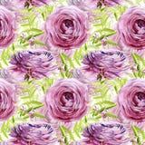 Ranunculusaquarellblumen Nahtloses Muster Lizenzfreies Stockbild