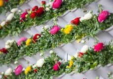 Ranunculusblühende Mehrfarbenblumenwand Lizenzfreies Stockbild