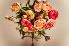 Ranunculuses Bouquet on a blured beige background Royalty Free Stock Photos