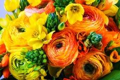 Ranunkulyus amarillo y anaranjado del ramo con las hojas verdes Fotos de archivo libres de regalías