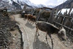 Ranwuhu banks of the Tibetan people Royalty Free Stock Images