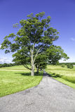 Raod to organic farm with trees Stock Photos