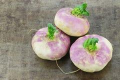 Rapa recentemente colhido do Brassica dos nabos da mola imagens de stock royalty free
