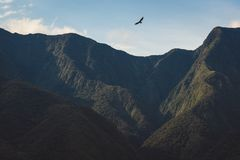 Rapace salente sopra i picchi di montagna irregolari immagini stock