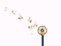 Rapagem do lápis da flor Fotografia de Stock