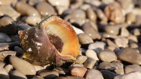 Rapan på stranden Fotografering för Bildbyråer