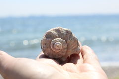 Rapan shell lies on the palm of the girl Royalty Free Stock Photography