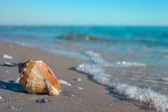 Rapana de Shellan en la playa del mar en la arena fotografía de archivo libre de regalías