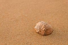 Rapana op het zand Stock Afbeelding