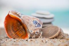 Rapana op zandig strand Stock Fotografie