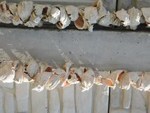 Rapana shells under the bright sun. Of the original invoice Stock Image