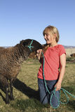 Rapariga e cordeiro 4-H Imagens de Stock