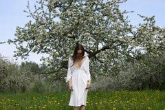 Rapariga na árvore de maçã de florescência próxima do vestido branco Imagens de Stock