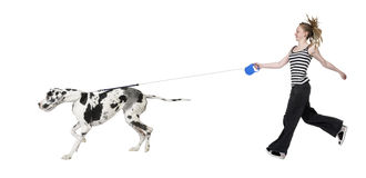 Rapariga que anda seu cão (grande dinamarquês 4 anos) ha Imagem de Stock Royalty Free