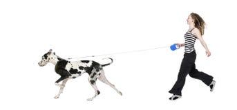 Rapariga que anda seu cão (grande dinamarquês 4 anos) ha Imagens de Stock Royalty Free