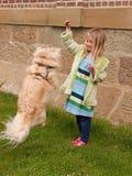Rapariga que joga com cão pequeno que está saltando   Imagens de Stock Royalty Free