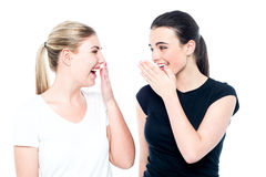 Raparigas que bisbilhotam e que têm o divertimento Imagens de Stock