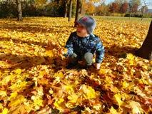 Rapaz novo do close up com folhas da queda fotos de stock