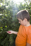 Rapaz pequeno bonito com a cereja das bagas em sua mão Fotografia de Stock Royalty Free