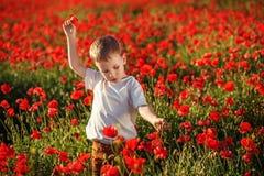 Rapaz pequeno bonito com a flor da papoila no campo da papoila no eveni do verão Fotografia de Stock Royalty Free