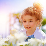 Rapaz pequeno bonito no campo da margarida Imagens de Stock