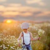 Rapaz pequeno bonito no campo da margarida no por do sol Imagens de Stock