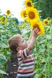 Rapaz pequeno com girassol Fotos de Stock