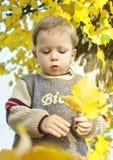 Rapaz pequeno com outono amarelo imagens de stock