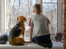 Rapaz pequeno com seu cão que olha através da janela Fotografia de Stock