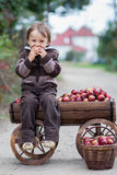 Rapaz pequeno, com um trole completo das maçãs Fotos de Stock Royalty Free