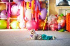 Rapaz pequeno com uma bola no gym imagem de stock
