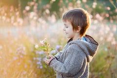 Rapaz pequeno doce, guardando flores no por do sol Foto de Stock Royalty Free