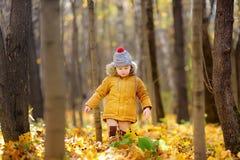 Rapaz pequeno durante a caminhada na floresta no dia ensolarado frio do outono imagens de stock royalty free