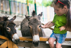 Rapaz pequeno e burro no jardim zoológico fotos de stock