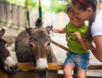 Rapaz pequeno e burro no jardim zoológico Imagens de Stock