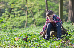 Rapaz pequeno e esquilo Fotografia de Stock