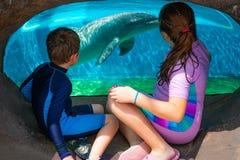 Rapaz pequeno e menina que olham o golfinho bonito atrav?s de uma janela em Seaworld na ?rea internacional da movimenta? fotografia de stock