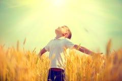 Rapaz pequeno em um campo de trigo na luz solar fotos de stock
