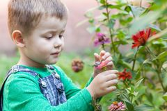Rapaz pequeno feliz que joga no parque com o caracol no tempo do dia Miúdo observando o caracol Fotografia de Stock Royalty Free