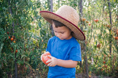 Rapaz pequeno no jardim orgânico Fotos de Stock Royalty Free