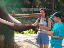 Rapaz pequeno que alimenta o elefante e sua mãe que afagam um elefante foto de stock royalty free