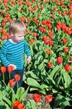 Rapaz pequeno que corre em campos das tulipas Imagem de Stock