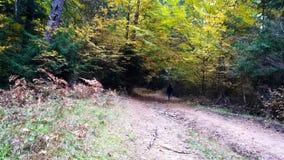 Rapaz pequeno que corre nas madeiras, outono