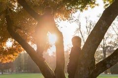 Rapaz pequeno que escala uma árvore em um parque no outono Fotos de Stock Royalty Free