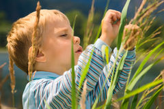 Rapaz pequeno que joga na grama alta fotos de stock